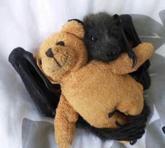 Bat cuddling a bear.