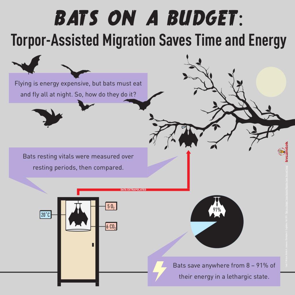 MigratingBats-MiniInfo V2 FINAL