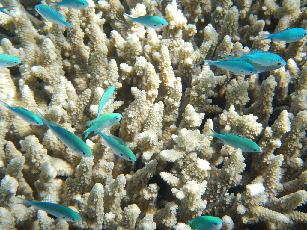 great barrier reef, nature