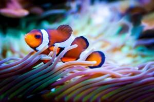 fish, coral reef, environment, ocean
