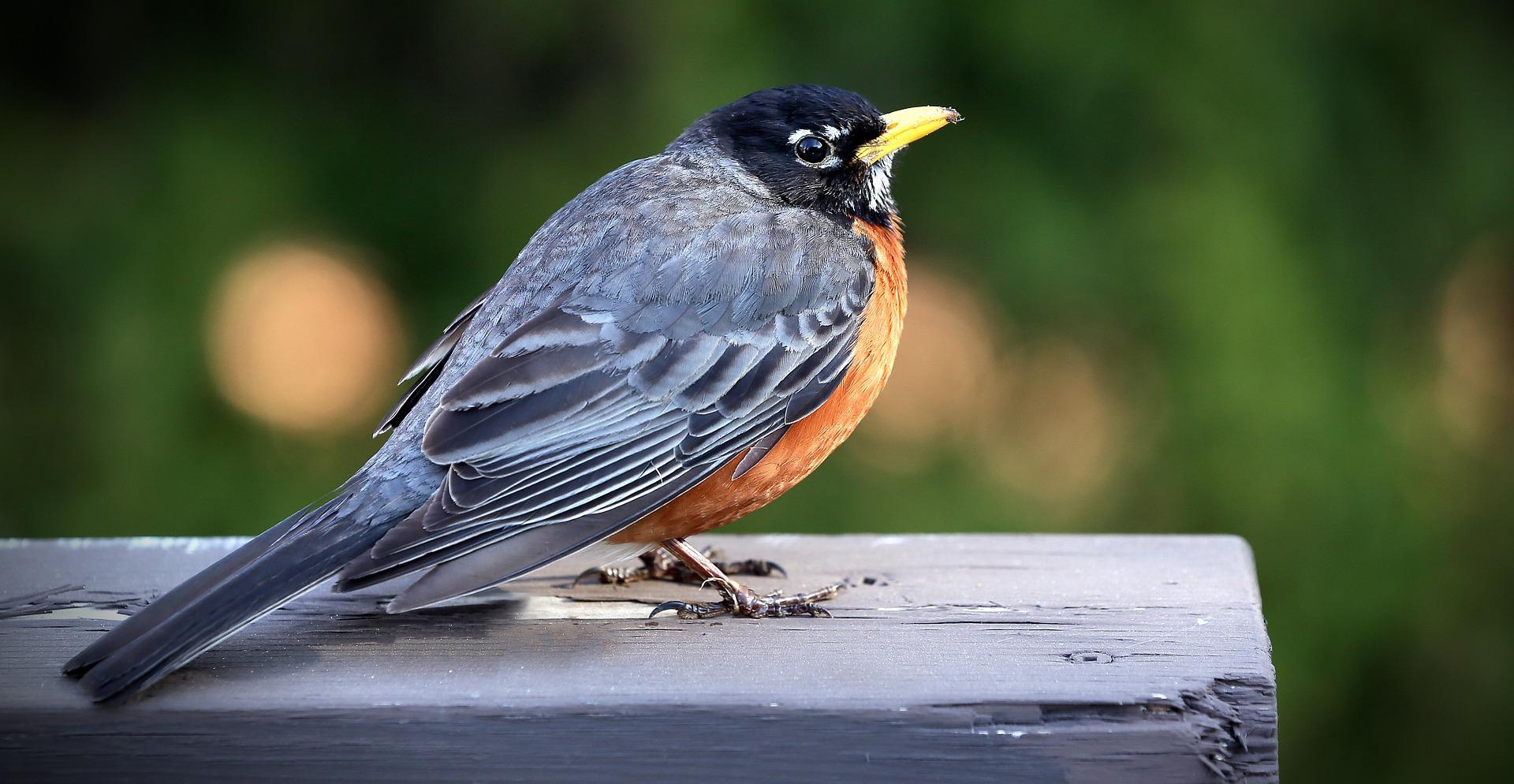 birds, science, animals
