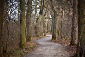 oak, oak tree, oak trees, forest, nature
