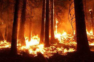fire, wildfire, smoke