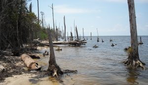 ghost forest, global warming, climate change
