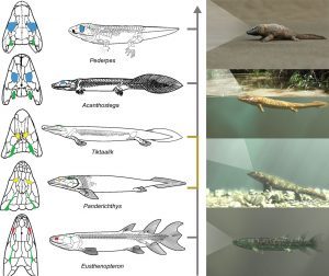 fish, biology, evolution