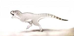 dinosaur, chicken, animal