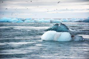 iceberg, icebergs, ocean