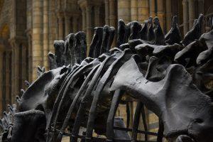 fossils, bones, dinosaurs