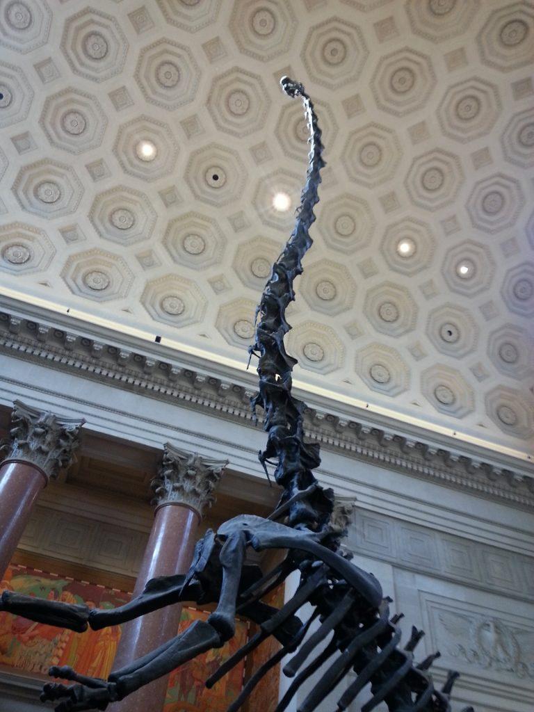 dinosaur, dinosaurs, bones, fossils