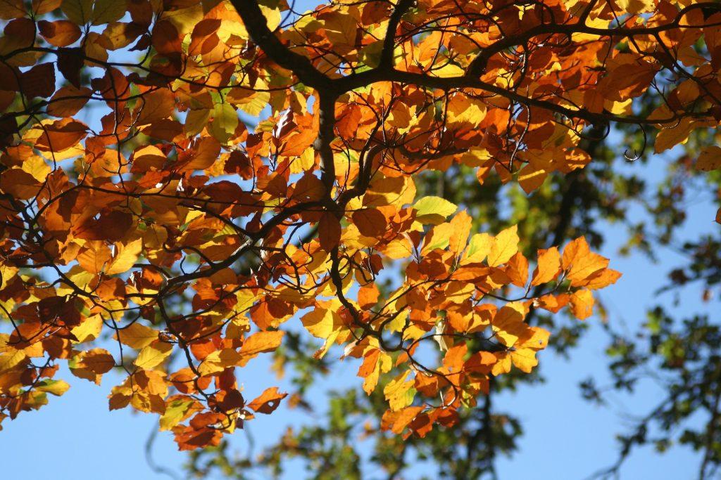 foliage, fall, autumn, leaves
