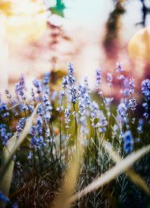 health, pollen, homeschooling