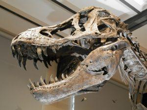 dinosaur, bones, fossils
