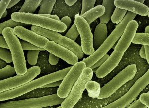 bacteria, virus