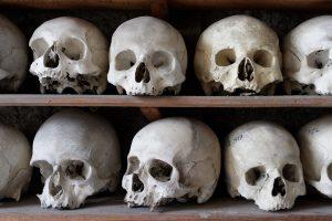 Skulls, bones