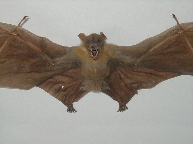Bats On A Budget