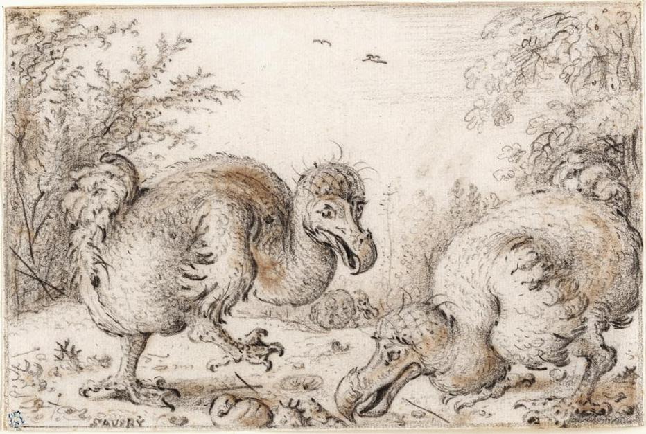 dodo bird