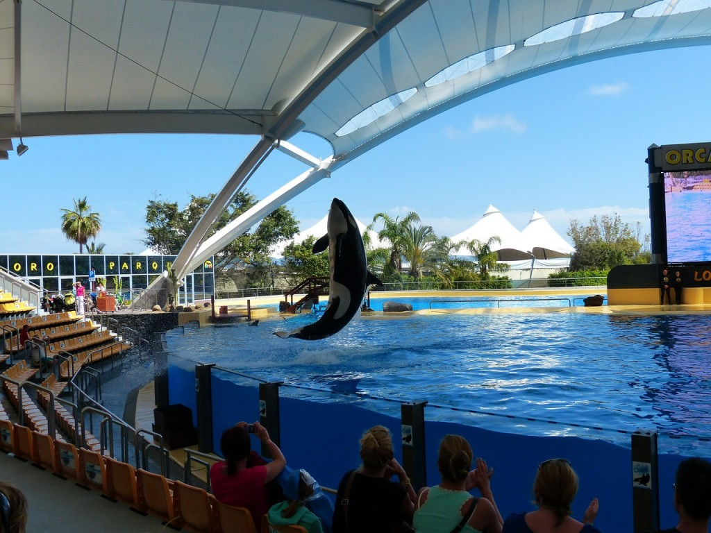 orca whale, science, seaworld