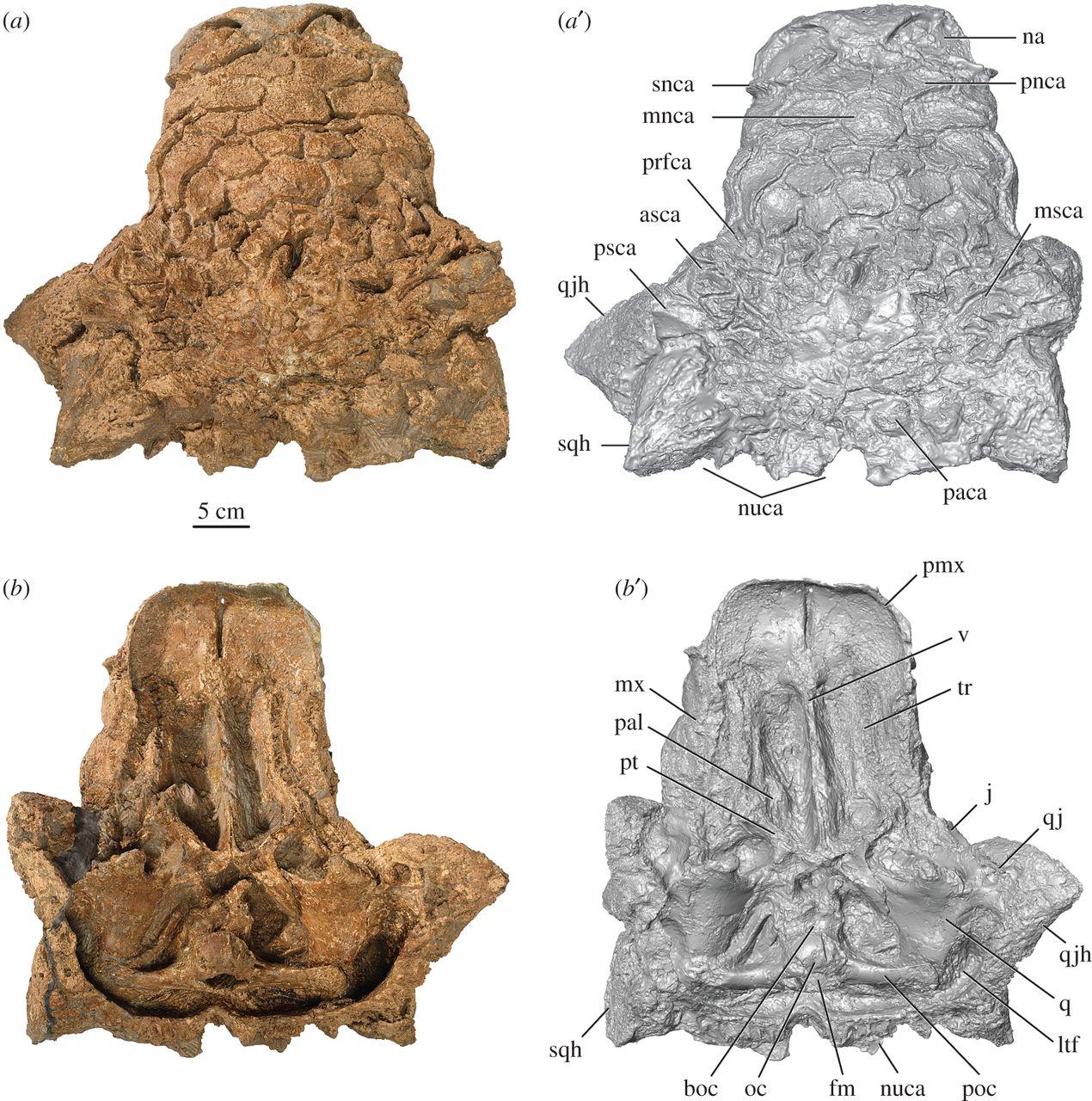 fossil, archaeology, dinosaur