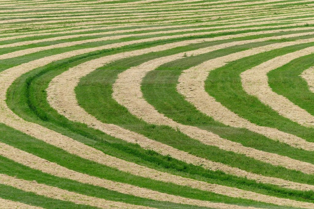 crops, crop, crop circle, field