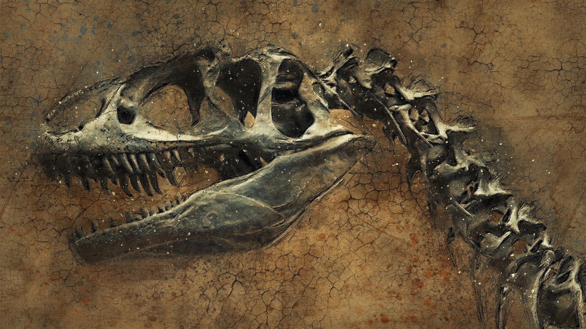 dinosaur, fossil, bones