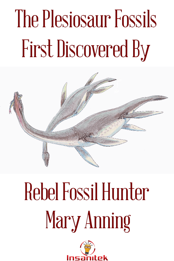 fossil hunter, women in science, foundational researchers, basic science, evolution, dinosaurs