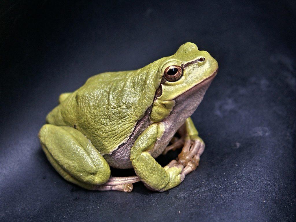 frog, animals