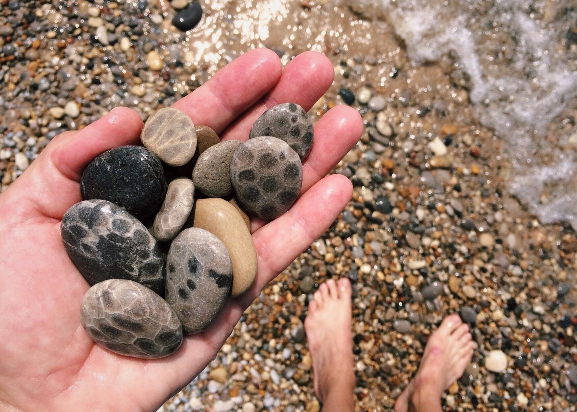 Petoskey stones, stones, rocks